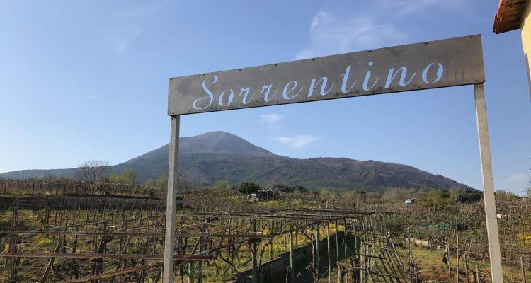 Sorrentino Winery Vesuvius