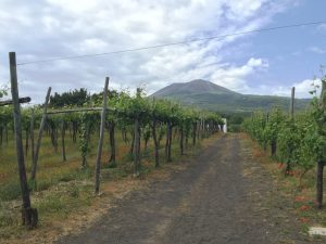 VIneyard with Vesuvius in background