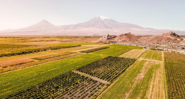 Khor Virap and a vineyard