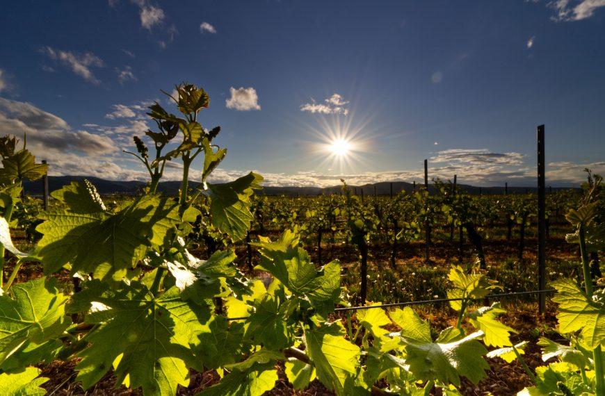 Wine Regions and Wines of Croatia